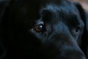 Dog Show - Brooklyn