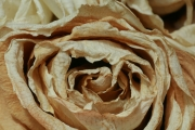 Dried Roses - #11