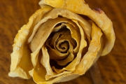 Dried Roses - #2