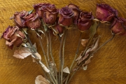 Dried Roses - #3