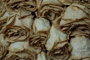Dried Roses - #7-1